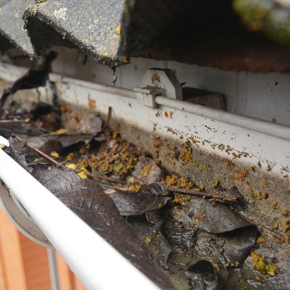 gutters full of algae and leaves