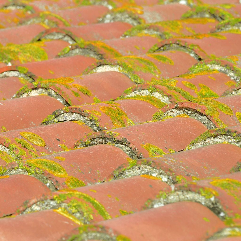 algae and mold growing on tiles, creating damage to a roof