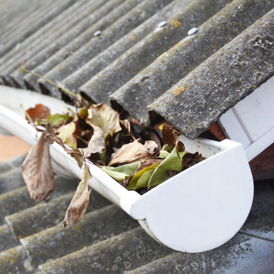 leaves fallen into a gutter